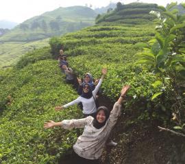 Tea garden in Bandung City